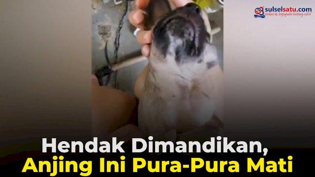 VIDEO: Hendak Dimandikan, Anjing Ini Pura-Pura Mati