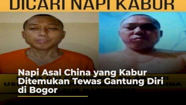 VIDEO: Napi Asal China yang Kabur Ditemukan Tewas Gantung Diri di Bogor