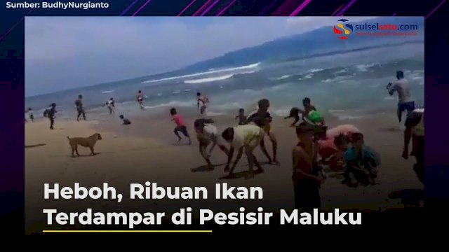 VIDEO: Heboh, Ribuan Ikan Terdampar di Pesisir Maluku