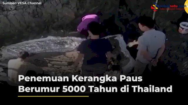 VIDEO: Penemuan Kerangka Paus Berumur 5000 Tahun di Thailand
