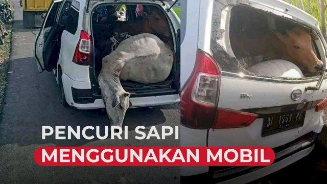 VIDEO: Polisi Gagalkan Pencuri Sapi Menggunakan Mobil Xenia