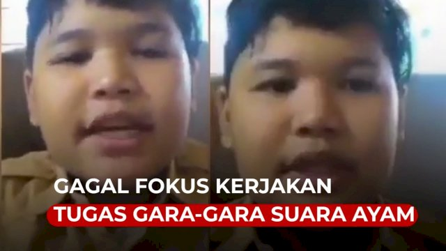 VIDEO: Kocak, Bocah Ini Gagal Fokus Kerjakan Tugas Gara-gara Suara Ayam