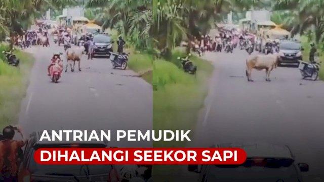 VIDEO: Viral, Antrian Pemudik Dihalangi Seekor Sapi