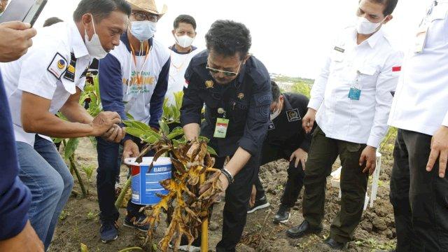 Sukses Budi Daya Porang, SYL: Syaharuddin Alrif Duta Petani Milenial Indonesia