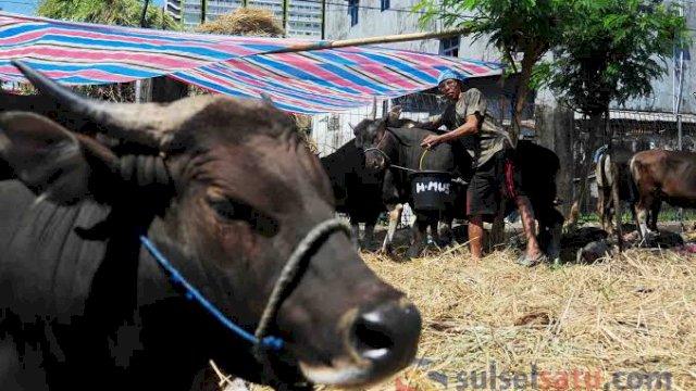 Jelang Lebaran Idul Adha, Danny Minta DP2 Makassar Pastikan Hewan Kurban Sehat