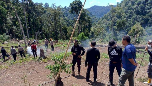 Polisi Musnahkan 7 Hektar Ladang Ganja, Selamatkan 10 Juta Jiwa