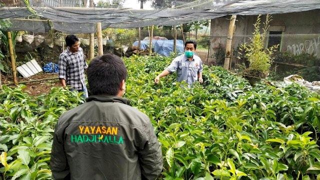 Yayasan Hadji Kalla Bagi Seribu Bibit Pohon Alpukat untuk Kelompok Tani