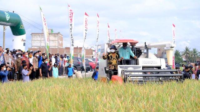 Panen Raya Padi di Sidrap, Plt Gubernur Sulsel: Alhamdulillah Produksi Padi Meningkat